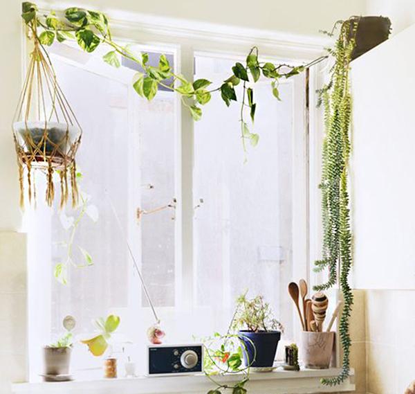 Las plantas para decorar la cocina